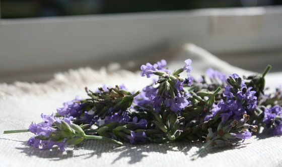 Lavender-in-my-Kitchen